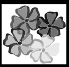 Blumen in Graustufen