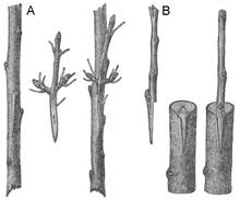 Pflanzenschnittstelle